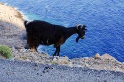 Cabra negra en la isla de Creta - Grecia Imagen de archivo