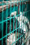 A cabra no jardim zoológico Imagens de Stock