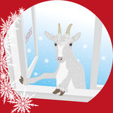 A cabra olha na janela - vem o ano dos carneiros Foto de Stock Royalty Free