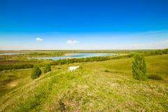 A cabra pasta em montes altos acima do lago, come a grama verde, um céu azul profundo, uma paisagem bonita da mola foto de stock