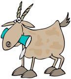 Cabra que come uma lata ilustração stock