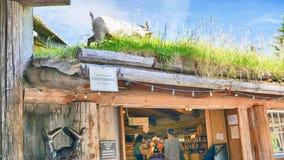 Cabra que pasta en el tejado de la hierba en Coombs Nanaimo Canadá foto de archivo