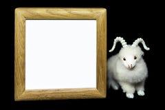 Cabra u ovejas con el marco de madera en blanco Imágenes de archivo libres de regalías