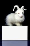 Cabra u ovejas con la tarjeta en blanco Imágenes de archivo libres de regalías