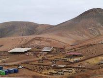 Cabras de Majorera nativas a Fuerteventura en España Imagen de archivo libre de regalías