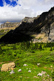 Cabras de montaña en el parque nacional de glaciar Imágenes de archivo libres de regalías