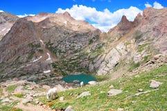 Cabras de montanha e Rocky Mountains Fotografia de Stock