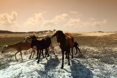 Cabras do deserto Fotografia de Stock