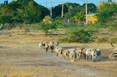 Cabras e carneiros em um campo fotos de stock
