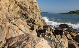 Cabras em Rocky Outcrop imagens de stock