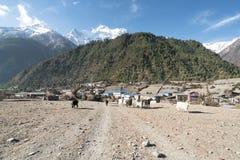 Cabras en el circuito de Annapurna, emigrando Fotos de archivo