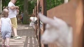 Cabras en el parque zoológico almacen de video