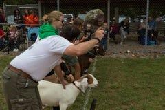 Cabras en la línea de salida Foto de archivo