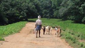 Cabras hearding del pastor en la naturaleza foto de archivo libre de regalías