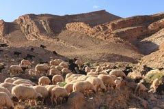 Cabras na montanha de atlas Imagens de Stock Royalty Free