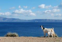 Cabras no fundo do mar azul fotografia de stock royalty free