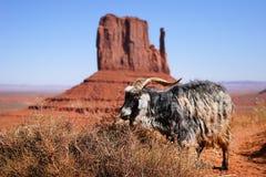 Cabras no vale do monumento Fotografia de Stock Royalty Free