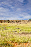 Cabras selvagens que vagueiam o deserto costal de Austrália em Ningaloo Imagem de Stock