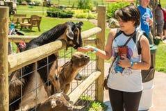 Cabras y muchacha Fotos de archivo libres de regalías