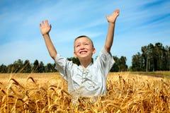 Cabrito en campo de trigo Fotografía de archivo libre de regalías