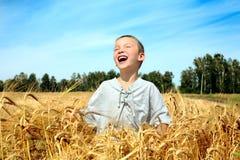 Cabrito en campo de trigo Imagen de archivo libre de regalías