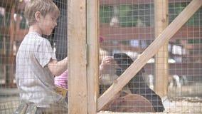 Cabritos en el parque zoológico almacen de metraje de vídeo
