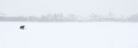 Cabritos en la nieve imágenes de archivo libres de regalías