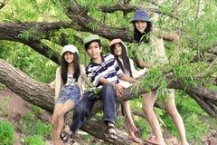 Cabritos que suben en árbol Fotografía de archivo