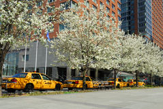 cabs nya gula york Fotografering för Bildbyråer