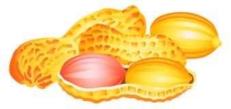 Cacahuete en un shell y borrado Imagenes de archivo