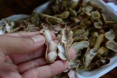 cacahuete pelado, cacahuetes hervidos Foto de archivo libre de regalías