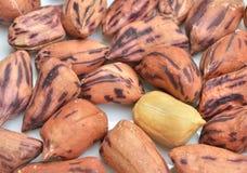 Cacahuetes asados Fotos de archivo
