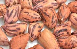 Cacahuetes asados Fotografía de archivo libre de regalías