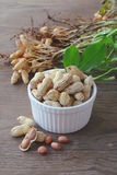 Cacahuetes en shelles Fotos de archivo libres de regalías