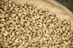 Cacahuetes que son secados Foto de archivo