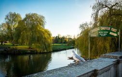 CaCAMBRIDGE, ΑΓΓΛΙΑ  ΣΤΙΣ 25 ΝΟΕΜΒΡΊΟΥ 2016 Έκκεντρο και σημάδι ποταμών: Γύρος κλωτσιών σοφέρ του Καίμπριτζ στοκ φωτογραφία