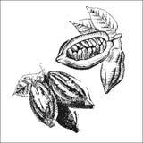 cacao Imagenes de archivo