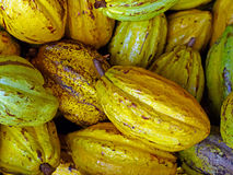 Cacao Photos stock