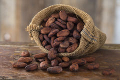 cacao Photographie stock