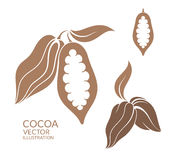 cacao Royalty-vrije Stock Foto