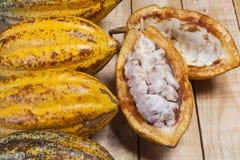 cacao zdjęcie stock