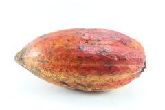 cacao Fotografie Stock