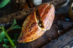 Cacao all'isola della Granada Immagini Stock Libere da Diritti