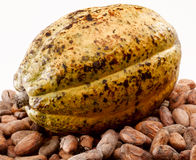 Cacao bean royalty free stock image