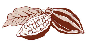 Cacao beans. Monochrome illustration of cacao beans Stock Photography