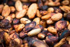 Cacao beans Royalty Free Stock Image