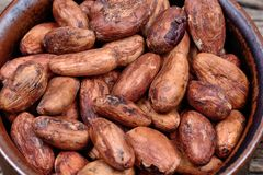 Cacao beans in a bowl royalty free stock image