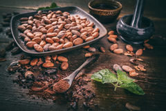 Cacao beans and cacao powder Royalty Free Stock Photos