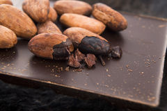 Cacao beans with chocolate Royalty Free Stock Photos