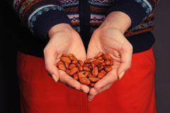 Cacao beans in the hands Royalty Free Stock Photo